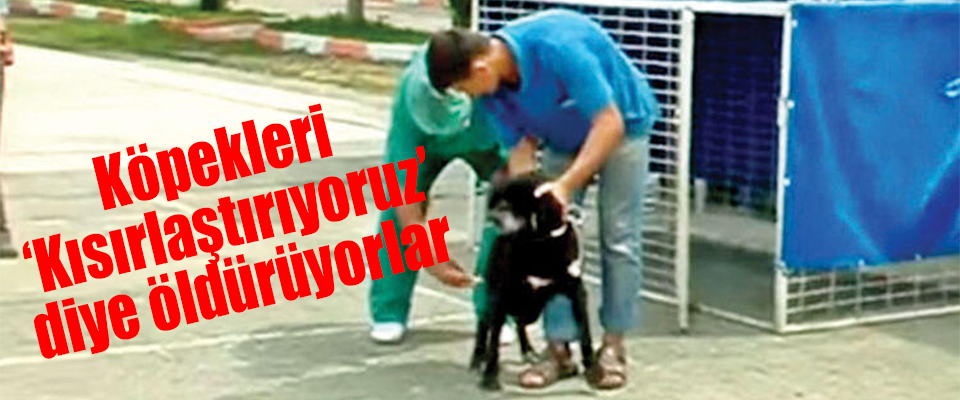 Köpekleri 'Kısırlaştırıyoruz' diye öldürüyorlar