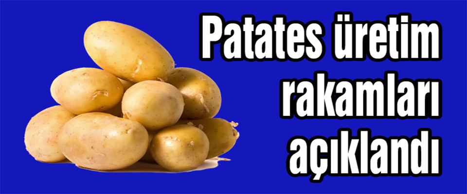 Patates Üretimi İstatistikleri