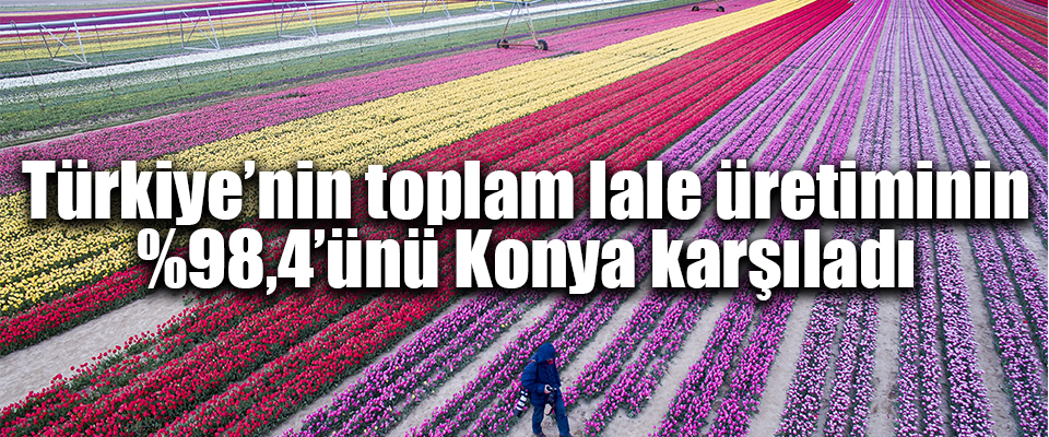 Türkiye'nin lale üretimini Konya karşıladı