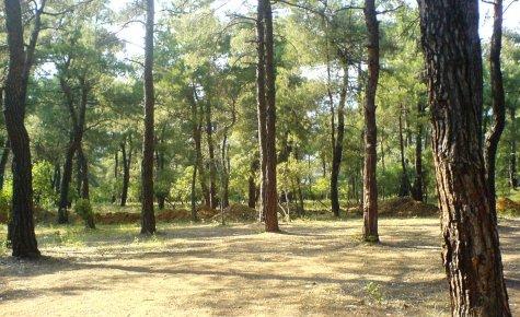 Mutluluk Ormanı Kampanyası