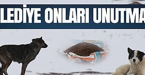 Karaman Belediyesi sokak köpekleri için yiyecek bıraktı
