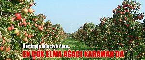 TÜRKİYE ELMAYI KARAMAN'DAN ALIYOR