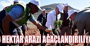 Yollarbaşı Köyünde 30 Hektar Arazi Ağaçlandırılıyor